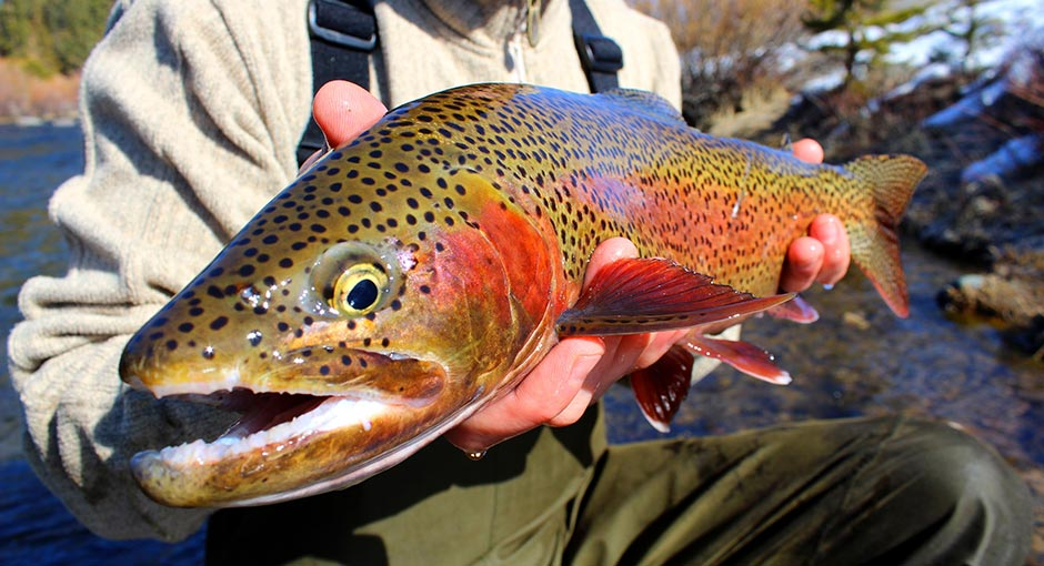Fly Fishing The Truckee River With Guide Matt Heron